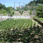 Die Gartenbassins