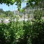 Organische Agrikultur